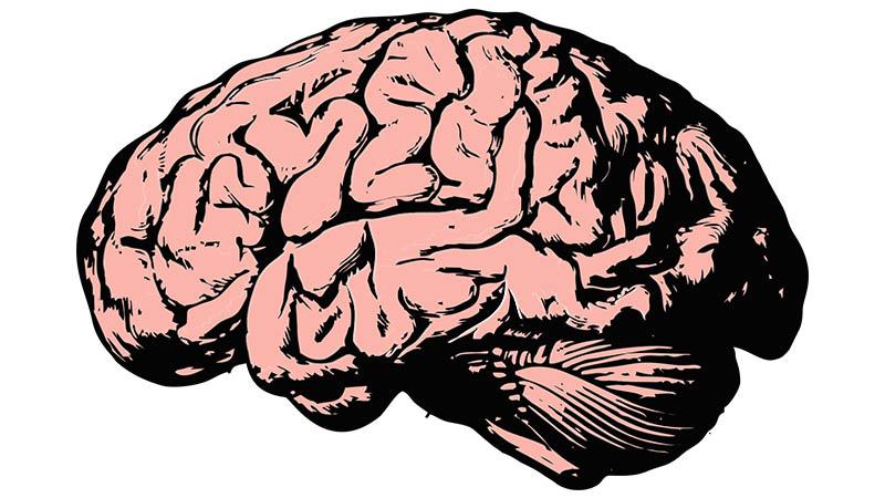 Les différences intellectuelles sont significativement génétiques